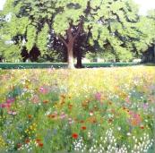LF wildflower meadow (1024x1014)