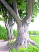 SP two beech trees 2 (778x1024)